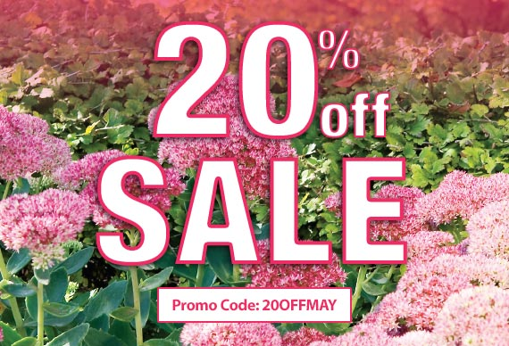 Save 20% On Your Next Order With Promotion Code: 20OFFMAY